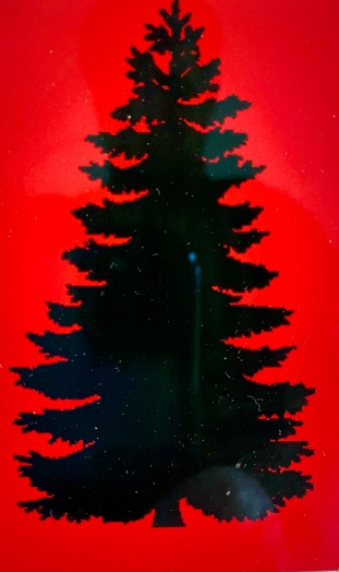 Boston Pine Tree